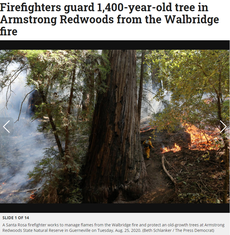 Armstrong Redwoods Fire